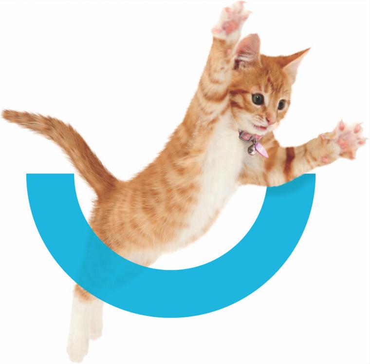 New Marin Humane Branding Kitty