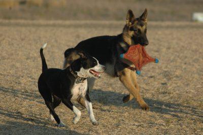 Marin Humane Society Dog Parks