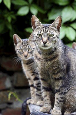 2 Cats, Feral Cats