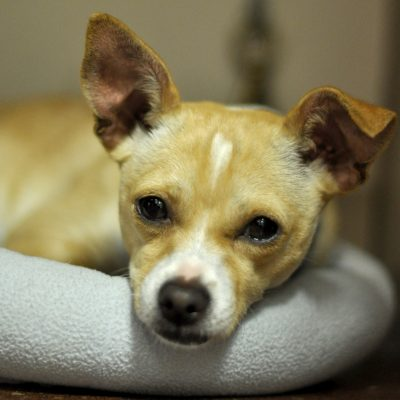 Companions in Crisis helps the pets of abuse victims.