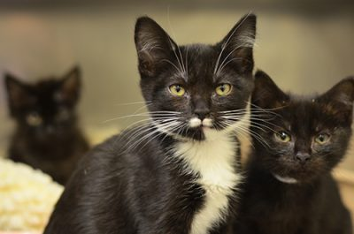 CatsLeftSep9-216626,627,628-500px