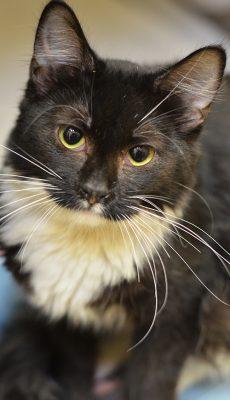 CatsLeftSep9-616640-500px