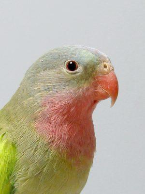 Bird Basics @ Marin Humane Society | Novato | California | United States