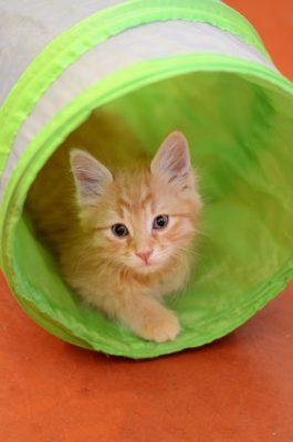 Online Kittens 101 @ Zoom