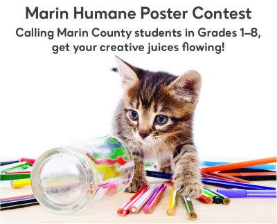 Humane education department poster contest