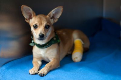 Pet First Aid & CPR @ Marin Humane
