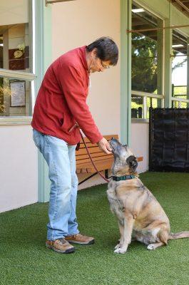 Paw Society at Marin Humane