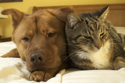 Dogs & Cats Living in Harmony @ Marin Humane