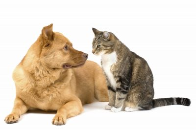 Dogs & Cats: Living in Harmony @ Marin Humane Society | Novato | California | United States