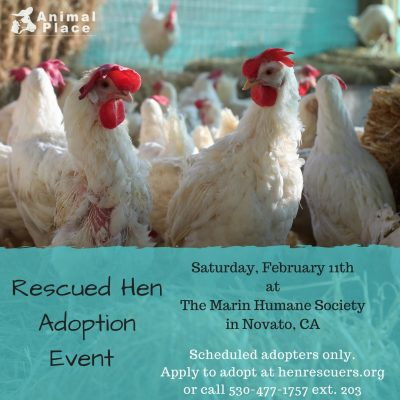 Chicken Adoption Event @ Marin Humane Society | Novato | California | United States