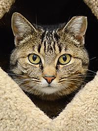 Cat Care Basics @ Marin Humane