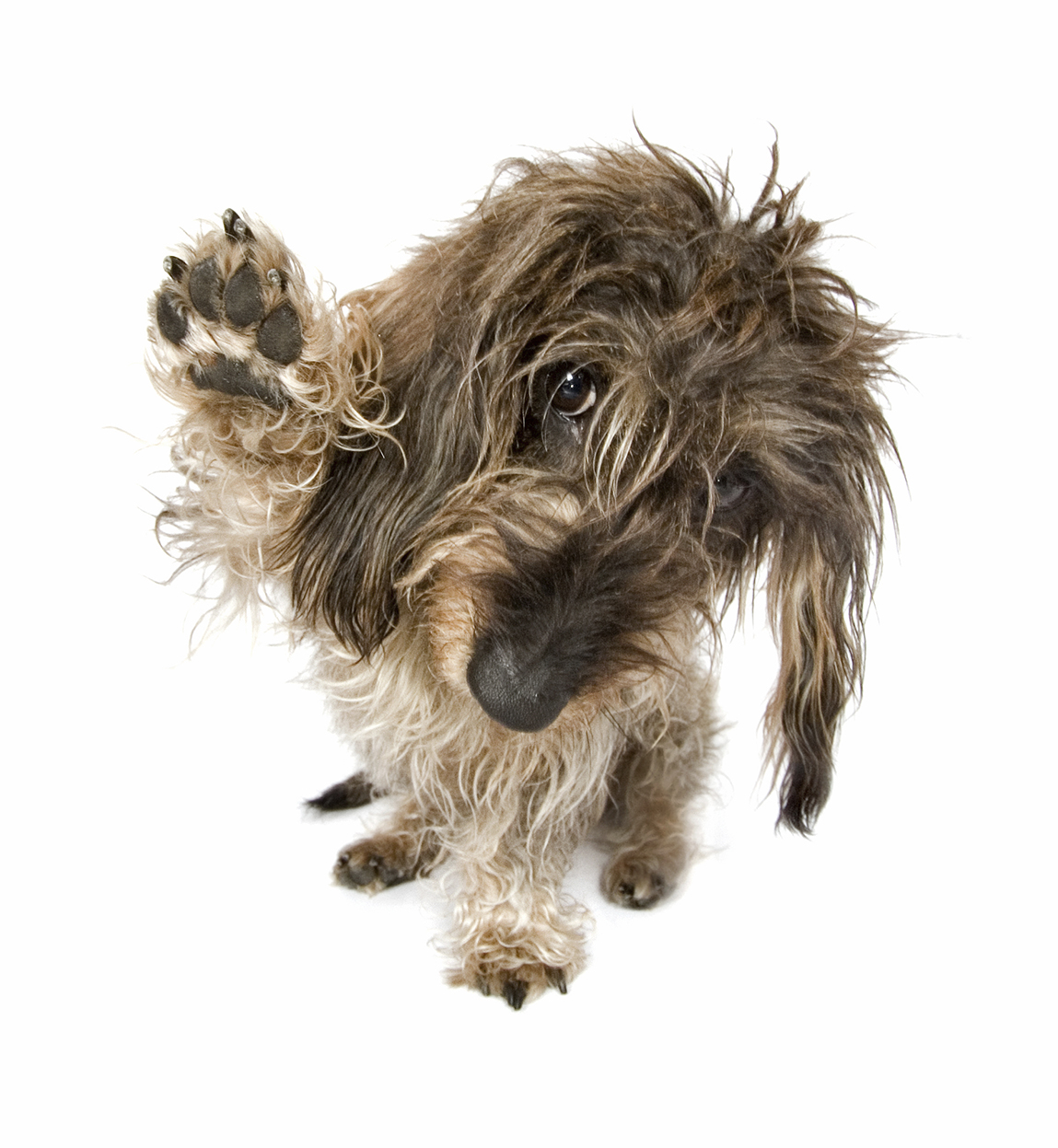 Canine Fun and Games! @ Marin Humane