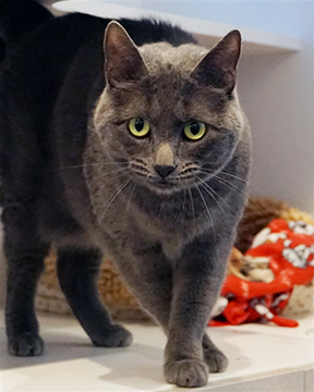 CANCELLED: What Is My Cat Saying? @ Marin Humane