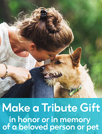 Make a tribute gift
