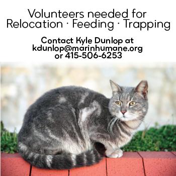Volunteers needed! Help cats!