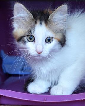 Kittens 101 @ Marin Humane