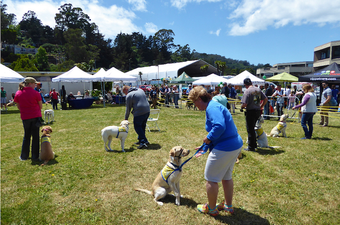 WAG Dog Festival @ Marinship Park