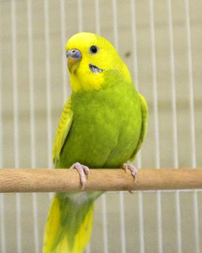Bird Basics @ Marin Humane