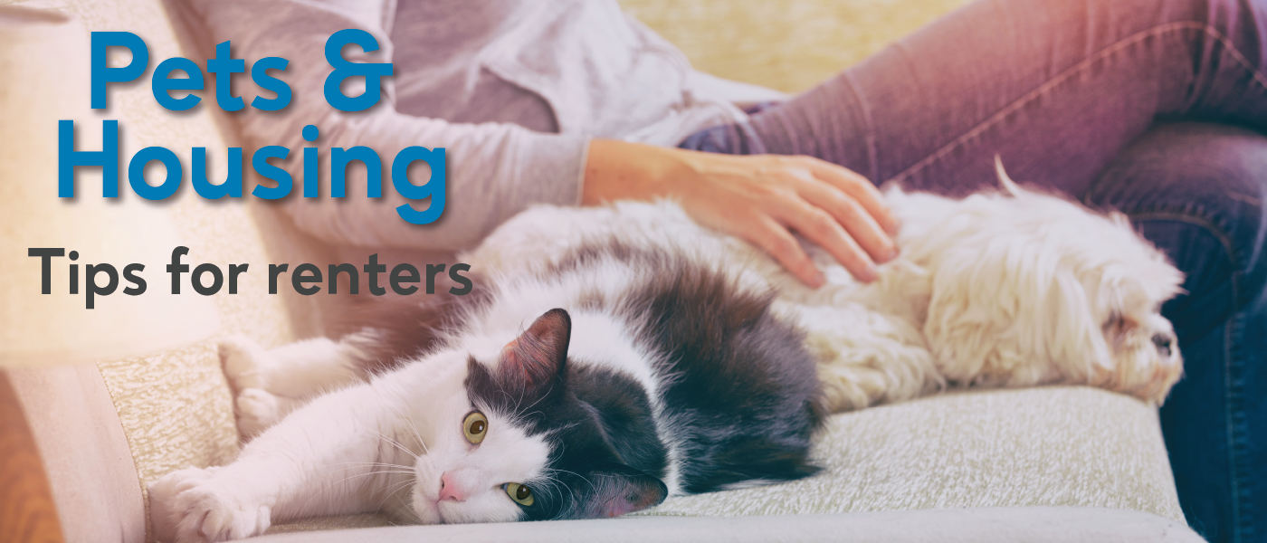 Pets And Housing Tips for Renters
