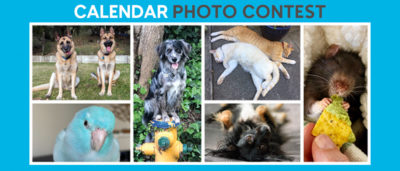 Marin Humane Calendar Photo Contest
