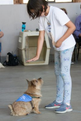VIRTUAL One-Day Camp: Dog Training! @ Online Zoom class