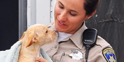 The Link Between Animal Abuse and Domestic Violence @ Online event